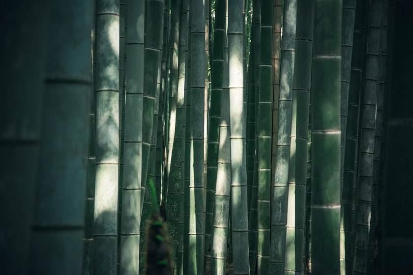 Bamboo packaging, alternative packaging materials