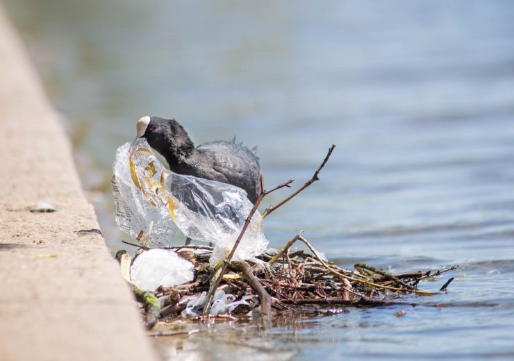 Coot and Plastic in the River Lea