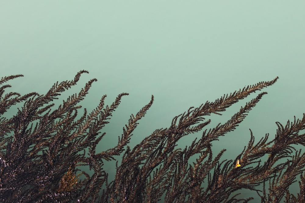 bioplastic fish