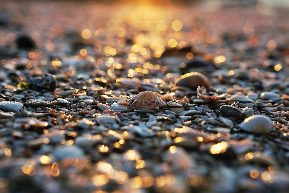 microplastics river thames