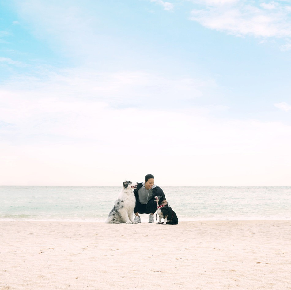 Purina Dogs Beach