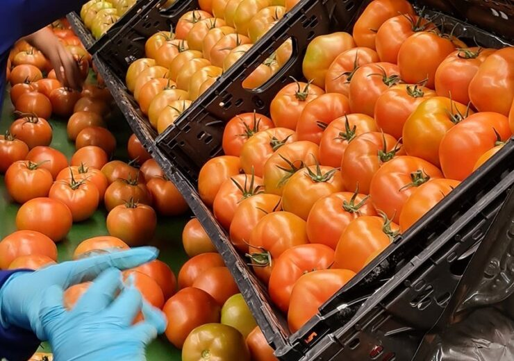 Agros Produce to use IFCO RPCs for packaging tomatoes