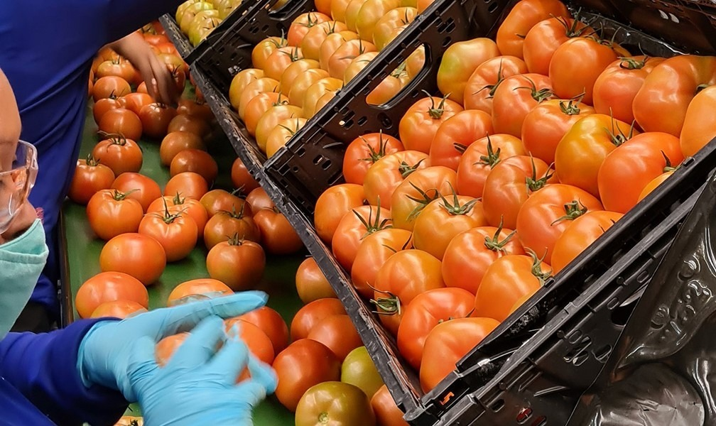 Fresh tomatoes meet IFCO supply chain in North America. (Credit: Business Wire.)