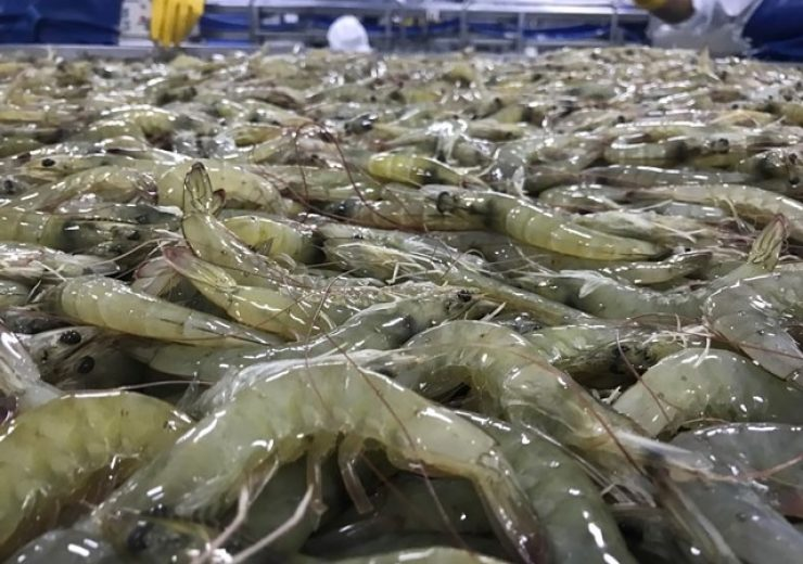 Nueva Pescanova selects IBM's blockchain-based network to trace seafood products
